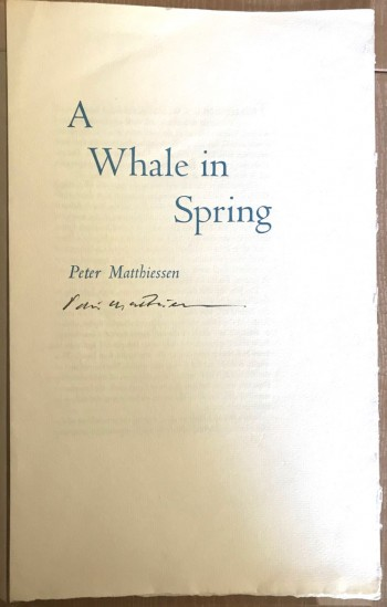 Image for A Whale in Spring